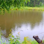 """о чем поют птицы. стихи ирины рословой """"птицы поют под дождем"""". дождь"""
