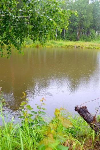 """пруд дождь лес - фото к стихотворению о птицах """"птицы поют под дождем"""""""