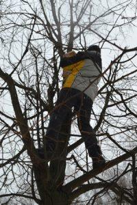 лазить по деревьям