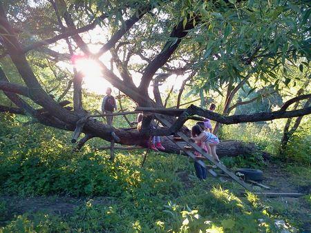 Детские стихи про дерево. Чудо-дерево. Вид с детьми