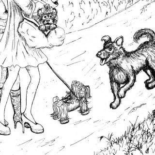 Басня о бездомной собаке, болонке и йоркширском терьере