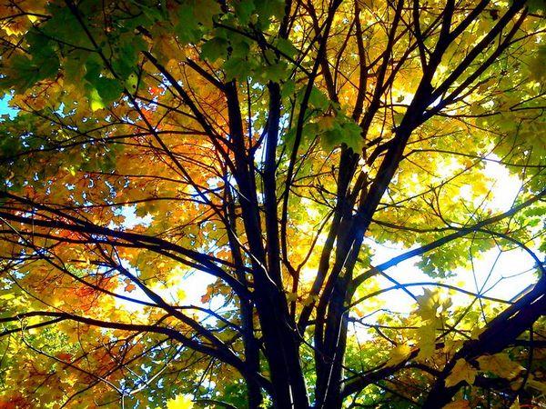 осень листва небо