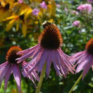 садовые цветы и шмель