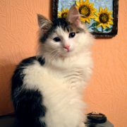 кот урчит - фото - иллюстрация к стишкам про кота