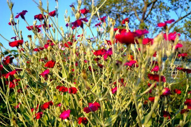 цветы иллюстрация к стихам про люблю