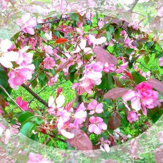 Ветви дерева с розовыми цветами иллюстрация к статье о том, как удивить любимого