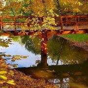 осень желтая листва мост