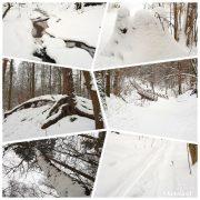 зимний лес фотоколлаж
