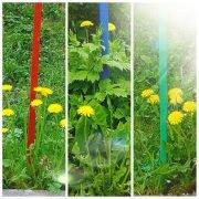 Коллаж из одуванчиков и цветного забора. Авторская иллюстрация к красивым летним стихам о детстве