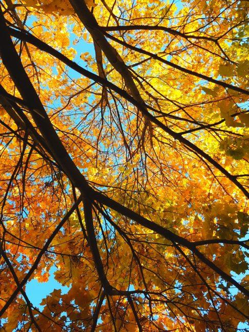 осеннее дерево небо листья осенние стихи лирические осень яблоко