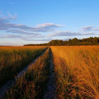дорога в поле на закате иллюстрация к авторским стихам о дороге и одиночестве души