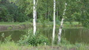 nochleg v lesu,ночлег в лесу