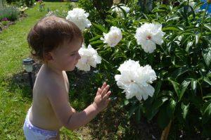 Белые цветочки. Короткие стихи малышам