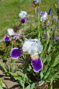 detskie stixi pro cvety,детские стихи про цветы