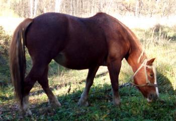 стихи про домашних животных «Говорит коровка «Му». Про лошадку
