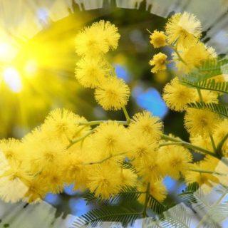 Красивое стихотворение о женщине - стихотворное поздравление с 8 марта