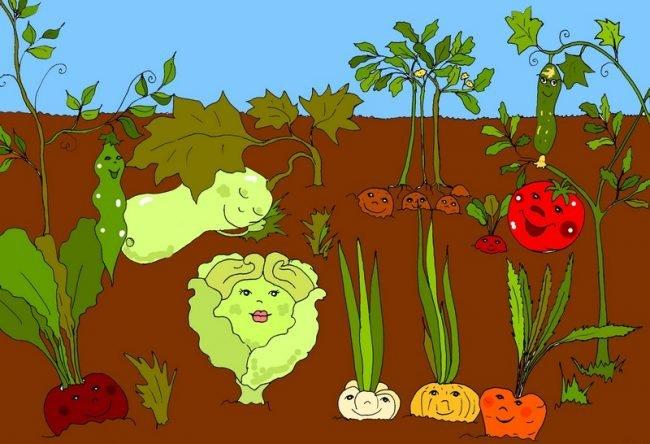 Детские овощные стихи про спор овощей в огороде «Огородная сказка» Стихи про овощи