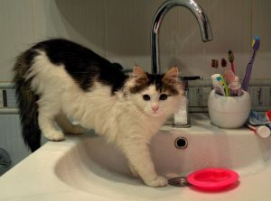котик в раковине - иллюстрация к стихам про котика