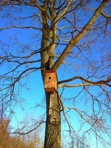 """Синее небо и скворечник на дереве иллюстрация к стихам """"придёт весна"""""""