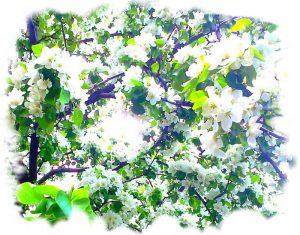 """Лето цветущая яблоня иллюстрация к стихам о лете """"Лето в душе"""""""