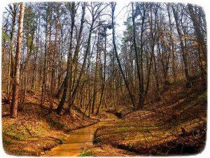 """весенний лес фотоиллюстрация к авторским стихам """"Дует ветер"""""""
